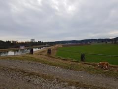 """Iller -der Fluss > am Illerkanal / Iller -the river > at the Iller canal / La rivière Iller> à l'Illerkanal (warata) Tags: 2019 deutschland germany süddeutschland """"southern germany"""" schwaben swabia oberschwaben """"upper swabia"""" """"schwäbisches oberland"""" """"baden württemberg"""" iller illertal illerkanal """"iller der fluss"""" river fluss landschaft landscape flusslandschaft herbst autumn flora pflanzen"""