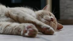 ... le sommeil du juste ... (nounette88) Tags: pixel repu sommeil juste chat spa àvotboncoeurmsieursdames