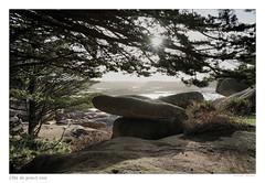 Côte de granit rose (Bruno-photos2013) Tags: mer sea rochers contrejour arbres lumière soleil bretagne côtedarmor trégastel