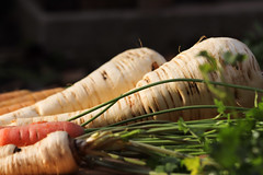CKuchem-2544 (christine_kuchem) Tags: bauerngarten beete biogarten ernte garten gemüse gemüsegarten herbst hochbeet karotte möhren nutzgarten pastinake petersilienwurzel sortenvielfalt vielfalt winter wintergemüse wurzelgemüse wurzelpetersilie bio biologisch frisch gesund rote
