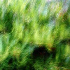 abstract (amazingstoker) Tags: abstract bush out focus icm intentional camera movement green long exposure le basingstoke amazingstoke basingrad hampshire basing view