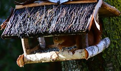 Munich - Hey, that's for the birds! (cnmark) Tags: germany munich deutschland münchen bayern bavaria amhart red squirrel rotes eichhörnchen baum tree birdhouse birdbox feeder vogelhaus vogelhäuschen nature natur ©allrightsreserved