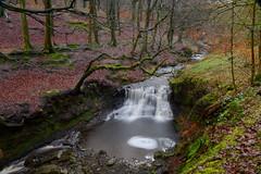 """RODDLESWORTH WOODS WATERFALL, RODDLESWORTH, LANCASHIRE, ENGLAND. (ZACERIN) Tags: """"roddlesworth woods waterfall"""" """"roddlesworth"""" """"lancashire"""" """"england"""" """"pictures of waterfalls"""" waterfalls in lancashire"""" """"christopher paul photography"""" """"zacerin"""" long exposure """"waterfalls exposure"""" """"long pictures"""" """"h2o"""" """"blue"""" """"water"""" """"uk"""" england"""" uk"""" united kingdom"""" """"anglezarke moor"""" """"anglezarke"""" """"river roddlesworth"""" roddlesworthwaterfall christopherpaulphotography zacerin outdoors lancashire"""