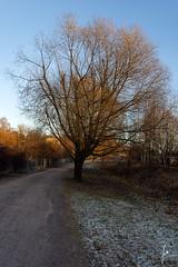 Tree alley (jannaheli) Tags: suomi finland helsinki kumpula nikond7200 visitfinland visithelsinki winter nature naturephotography naturetherapy photoshooting longwalkingwithmycamera walkingwithmycamera coldwinterday