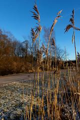 Cold winter day (jannaheli) Tags: suomi finland helsinki kumpula nikond7200 visitfinland visithelsinki winter nature naturephotography naturetherapy photoshooting longwalkingwithmycamera walkingwithmycamera coldwinterday