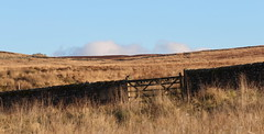 Bleak but beautiful Landscape 2 (jdathebowler Thanks for 4.5 Million + views.) Tags: landscape countryside drystonewall countryscene scenicview countryview bleakbutbeautiful dayoutinthecountry gate moorland yorkshiredales