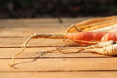 CKuchem-2543 (christine_kuchem) Tags: bauerngarten beete biogarten ernte garten gemüse gemüsegarten herbst hochbeet karotte möhren nutzgarten pastinake petersilienwurzel sortenvielfalt vielfalt winter wintergemüse wurzelgemüse wurzelpetersilie bio biologisch frisch gesund rote