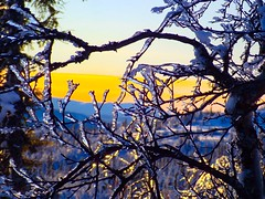 Silver branches. Gausta mountains. Norway. (trine.syvertsen) Tags: norway ice snow ski mountain gausta silverbranches
