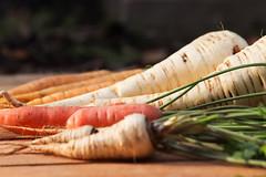 CKuchem-2538 (christine_kuchem) Tags: bauerngarten beete biogarten ernte garten gemüse gemüsegarten herbst hochbeet karotte möhren nutzgarten pastinake petersilienwurzel sortenvielfalt vielfalt winter wintergemüse wurzelgemüse wurzelpetersilie bio biologisch frisch gesund rote
