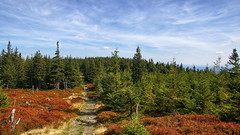 *** (pszcz9) Tags: polska poland karkonosze góry mountains parknarodowy nationalpark las forest pejzaż landscape beautifulearth sony a77