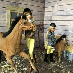 Working in the stable (Foxy Belle) Tags: doll skipper barn horse learn ride learning vintage diorama scene hay wooden 16 scale playscale barbie foal clover brown flocked black mane american girl riding park 1600 boots equestrian stable feed