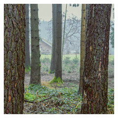 Approach (memories-in-motion) Tags: square format frame white nature forest bavaria green moss trees house building border mood olympus em5markiii olympusm12100mmf40 f4 44mm mft story approach iso1600