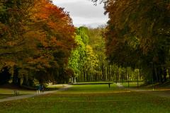 Nature (ost_jean) Tags: natuur nature autumn ostjean nikon d5300 tamron sp 90mm f28 di vc