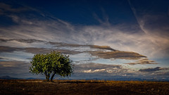 Northern Spain (Patrik S.) Tags: sony a7m3 a7iii tree lonely árbol solitario cloud formation formación de nubes nube grass césped montañas mountains zona desierta deserted area puesta sol sunset blue azur azul tallo stalk romantic romántico tranquillo pacífico peaceful quiet landscape paisaje