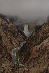 1dx_008103206 (captured by bond) Tags: yellowstone waterfall yellowstonefalls nationalpark