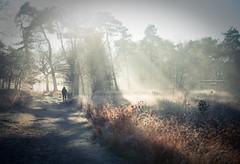 We ourselves must walk the path (Ingeborg Ruyken) Tags: ochtend morning sunrise 500pxs wandelen walk natuurmonumenten boxtel natuurfotografie autumn fall kampina herfst