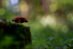 Vintage lens photography (steffos1986) Tags: nature landscape mushroom fall autumn beautiful bokeh forest