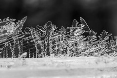 Ice Forest (brucetopher) Tags: ice crystals crystal freeze freezing cold icy landscape iceforest frozenforest abstract scene winter frozen geometric fractal grown growing