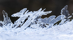 Ice Crystals (brucetopher) Tags: ice crystals crystal freeze freezing cold icy landscape iceforest frozenforest abstract scene winter frozen geometric fractal grown growing