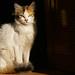 kitten, Blue City, Chefchaouene, Morocco, 摩洛哥