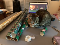 2019 358/365 12/24/2019 TUESDAY - Wrapping Assistant (_BuBBy_) Tags: 2019 358365 12242019 tuesday wrapping assistant 12 24 358 365 december 365days project project365