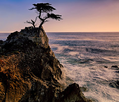 The Lone Cypress (lfeng1014) Tags: thelonecypress montereycypresstree cypresstrees monterey pebblebeach granitehillside famoustree tree california pacificocean ocean light canon5dmarkiii ef2470mmf28liiusm landscape 17miledrive usa travel lifeng