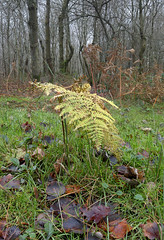 Isolated fern, (Through Bri`s Lens) Tags: sussexdowns ahshurst winter fern wood trees undergrowth brianspicer polariser canon5dmk3 canon1635f4 focusstack
