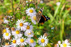 Dragonfly (Andrey Sklyarenko) Tags: balashiha autumn dragonfly insect балашиха бабочка насекомое осень balashikha moscowoblast russia