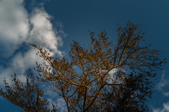 DSC07370 (DANNY LIN__) Tags: sony sel2470za sonya7s taiwan hsinchu zoo zeiss photo photooftheday photography portraits