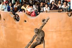 DSC07346 (DANNY LIN__) Tags: sony sel2470za sonya7s taiwan hsinchu zoo zeiss photo photooftheday photography portraits