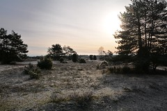 frozen Heathland / gefrorene Heide (r.stopable1) Tags: heathland winter heide gefroren frost frozen landschaft landscape hermannsburg tiefental südheide cellerland niedersachsen lowersaxony norddeutschland northerngermany natur nature