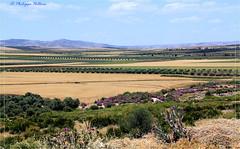 La campagne environnante de Volubilis (philippedaniele) Tags: volubilis maroc fesmeknes vestiges vestigesromains campagne colonnes
