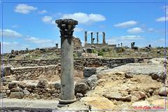 Le Capitole (philippedaniele) Tags: volubilis maroc fesmeknes vestiges vestigesromains campagne colonnes