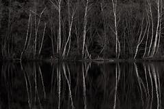 19114312 (felipe bosolito) Tags: forest lake birch reflection symmetry dark contrast rhythm blackandwhite blackwhite bw fuji xpro2 xf90f20 acros