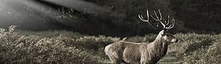 Hungary Luxury Big Game Hunting 41