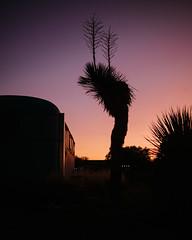 El Cosmico (Zack Huggins) Tags: olympusomdem5markii panasonicleicadgsummilux25mmf14 vscofilm pack01 marfatx elcosmico transpecosfestival sunset magichour dusk twilight silhouette cactus cacti rv campvibes camping campingtrip campout roadtrip weekendgetaway weekendwarriors vacation desert highdesert rnifilms microfourthirds bokeh dof purple gold pink