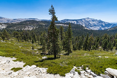 Yosemite (ValeTer_) Tags: mountainous landforms balsam fir mountain larix lyalliisubalpine larch wilderness tree nature lodgepole pine shortleaf black spruce natural environment nikon d7500 california national park usa yosemite nps nikond7500 landscape forest nationalpark