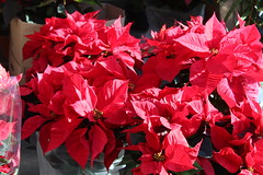 Nice - Noël 2019 (berthereau.frederique) Tags: villedenice nice06 nissalabella marchéauxfleurs fleurs flowers vieuxnice courssalya noël2019 noêl cotedazur regionsud paca granderoue sunset coucherdesoleil