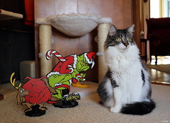 """""""Get ready to run Grinch.. the mail lady is almost here!!"""" (Lisa Zins) Tags: petsandanimals pets animals cat feline lisazins christmas 2019 pose face tabby elijah grinch max howthegrinchstolechristmas thegrinch drseuss artwork handmade wood painted custom mini green decorations happycaturday december28 christmassy"""