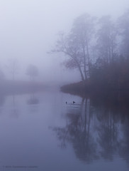 two cormorants on foggy morning [explored] (Constantine L.) Tags: cormorant bird nature fog foggy morning trees landscape water lake maury newport news virginia winter reflections