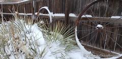 December 28, 2019 - Snowy backyard scene. (ThorntonWeather.com)