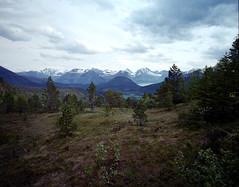 Forest (Jean-Baptiste Huet) Tags: norway norvège mamiya mamiya7ii film nature 6x7 fuji fujipro argentic argentique