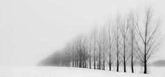 Winter (Gilles Meunier photo) Tags: assomption winter lassomption hiver neige snow cold tempest tempête rural