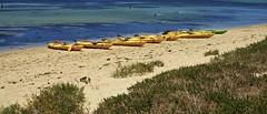 Mellow Yellow (Padmacara) Tags: australia penguinisland bird d7100 tamron 28300mm sea ocean water kayak boat paddle yellow