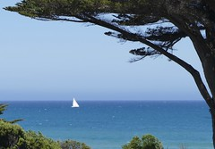 Sailing By (The Pocket Rocket) Tags: yacht apollobay thegreatoceanroad victoria australia