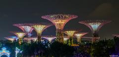 Supertree Grove, Gardens by The Bay, Singapore (fandarwin) Tags: supertree grove gardens by the bay singapore long exposure darwin fan fandarwin olympus omd em10