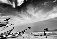(sharmi_diya06) Tags: street streetphotography streetphot blackandwhite birds animal people letsexplore outside sky shadow natgeoyourshot natgeophotographers natgeophotographer yourshotnatgeo