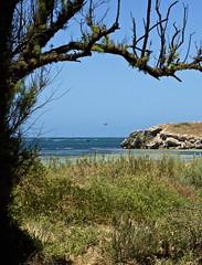 Island Idyl (Padmacara) Tags: australia penguinisland bird d7100 tamron 28300mm sea ocean water tree rock flight