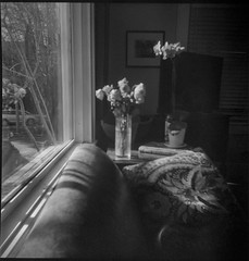 roses, orchids, patterned pillow, couch, picture window, Asheville, NC, Eho Altissa box camera, Bergger Pancro 400, CineStill Film Df96 Monobath developer, 12.27.19 (steve aimone) Tags: roses orchids pillow patterned couch picturewindow asheville northcarolina ehoaltissa boxcamera berggerpancro400 cinestillfilmdf96monobathdeveloper 6x6 mediumformat 120 120film film blackandwhite monochrome monochromatic