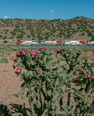 Warbonnets and Cholla Blossoms (thechief500) Tags: atsf bnsf clovissubdivision eastofabocanyon railroads kayser nm usa